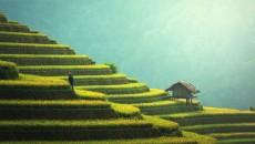 agriculture-1807581_1280 pixabay